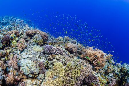 A thriving, healthy tropical coral reef system in the Philippines Reklamní fotografie - 129539967