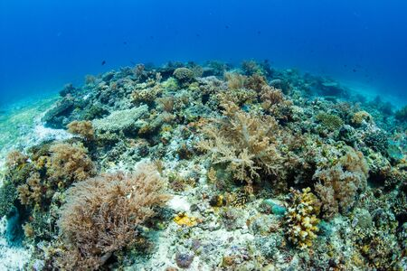 A thriving, healthy tropical coral reef system in the Philippines