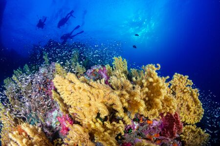SCUBA divers on a colorful tropical coral reef