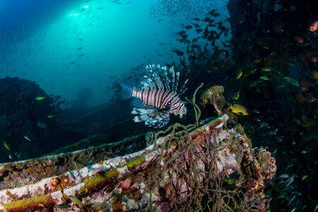 Lionfish on an old, broken shipwreck in a tropical ocean Archivio Fotografico