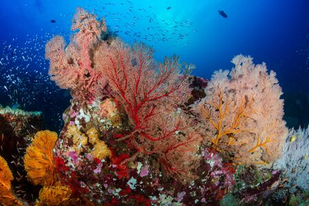 Beautiful, Colorful Tropical Coral Reef and Fish Underwater