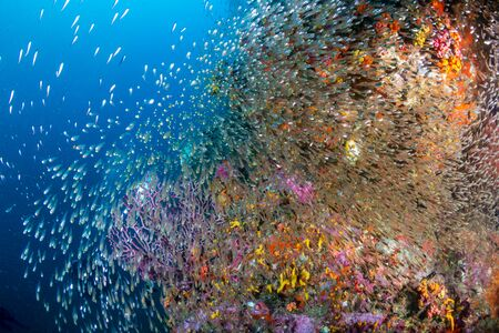 A beautiful, colorful tropical coral reef in Thailand's Similan Islands