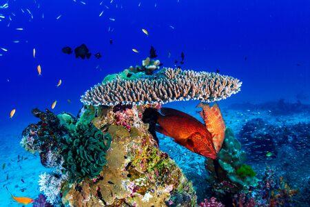 Een prachtig, kleurrijk tropisch koraalrif op de Similan-eilanden in Thailand Stockfoto