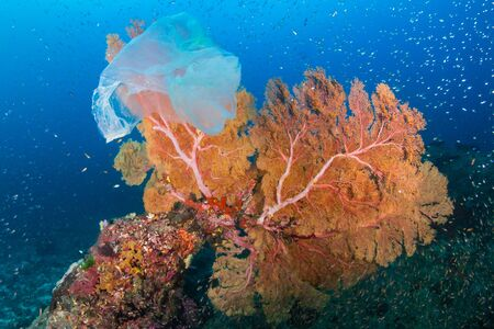 Plastic Pollution - a discarded plastic bags drifts across a tropical coral reef in Asia