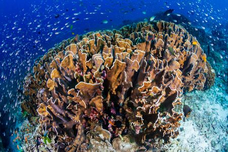 Beautiful tropical coral reef at Thailand's Similan Islands in the Andaman Sea Stock Photo - 135418744