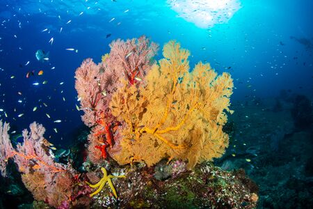 Beautiful, colorful tropical coral reef at Koh Tachai Island Stock Photo - 135418931