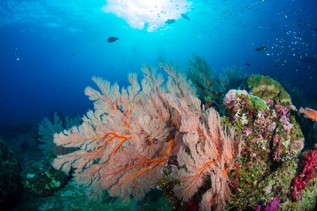 Beautiful, colorful tropical coral reef at Koh Tachai Island