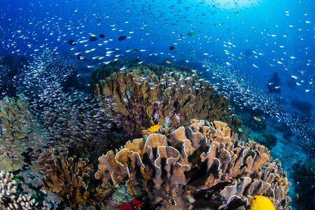 Beautiful tropical coral reef at Thailand's Similan Islands in the Andaman Sea Stock Photo - 135419077