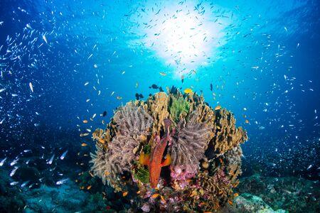 Beautiful tropical coral reef at Thailand's Similan Islands in the Andaman Sea Stock Photo - 135419331