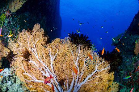 Beautiful tropical coral reef at Thailands Similan Islands in the Andaman Sea Stock Photo