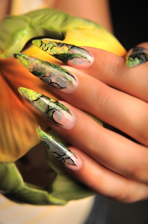 manicures beautiful pattern on nails Stock Photo - 16763909