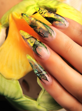 manicures beautiful pattern on nails Stock Photo - 16763907