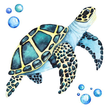 Big Sea Turtle Handdrawing Watercolor Illustration a High Resolution