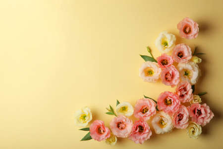 beautiful flower arrangement on a colored background with place for text.