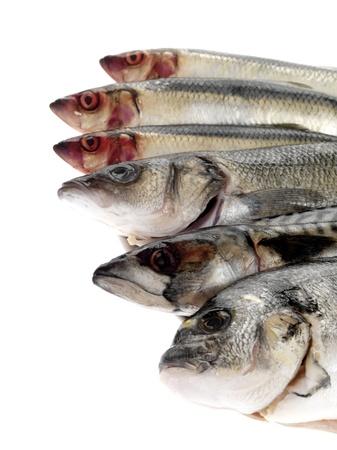 Platter of Fish Stock Photo - 15572541