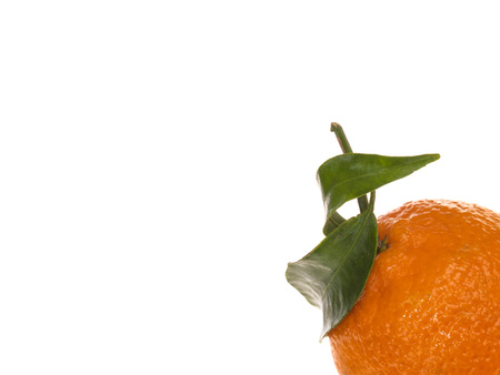 clementine fruit: Creative Image of a Single Fresh Ripe Clementine Orange Fruit For Healthy Eating and Living Against a White Background With Copy Space