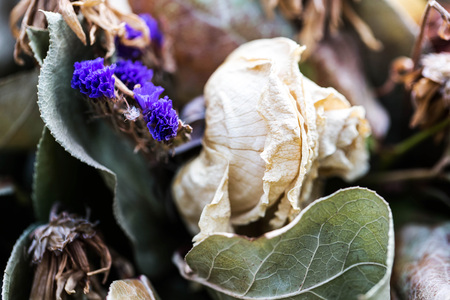 decaying: An Abstract Arrangement of Dead Mixed Flower Blooms