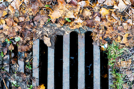 Dead Leaves Surrounding a Drain Cover on the Side of A Road