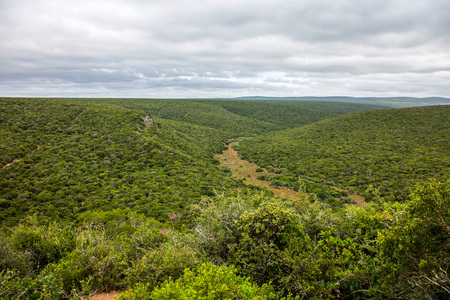 Addo Elephant Park or Game Reserve Eastern Cape South Africa Stock Photo