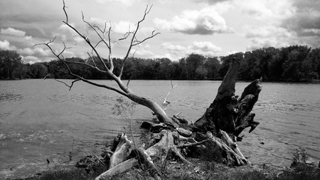 rooted: River Rooted Through It