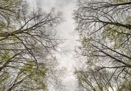 a look at the top of a trees Stock Photo - 2876218