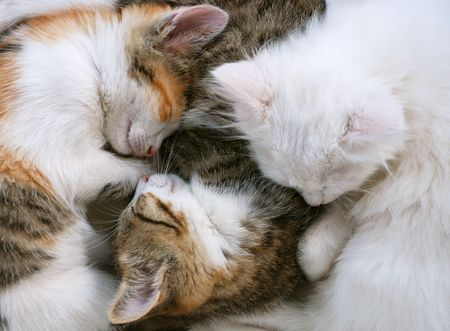 cat grooming: kittens are sleeping together Stock Photo