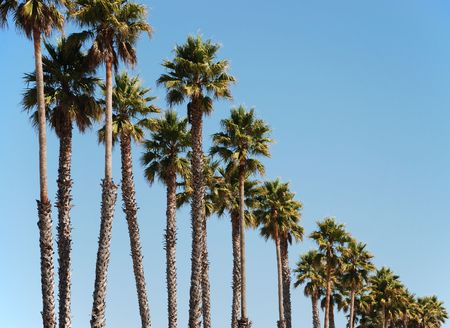 a row of palm trees on a sunny day