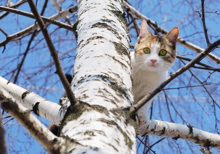 A cat on a tree looking down