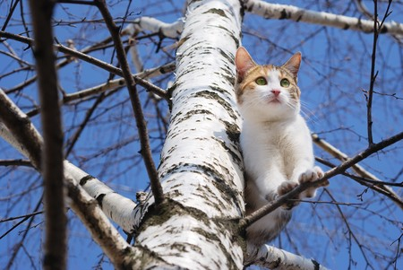 A cat on a tree on a winter sunny day photo