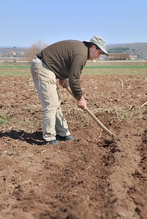 A man covering onion using a hoe.