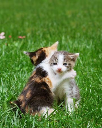 gato jugando: Gatitos jugando en el c�sped de capturas como en abrazo plantean.