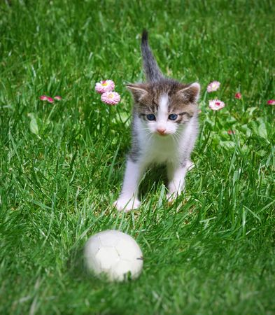 A kitten playing with a ball in the grass. photo