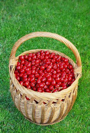 bing: Bing cherries in wooden basket on the grass.