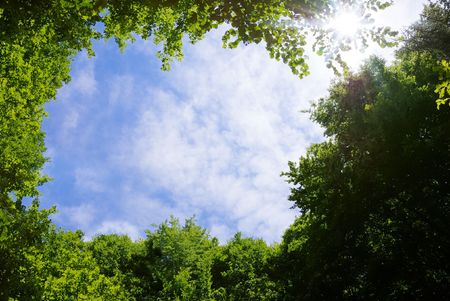 Picture frame made of tree tops surrounding sky and Sun. Stock Photo