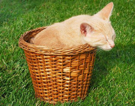 cat grooming: Cute yellow kitten sleeps in a basket.