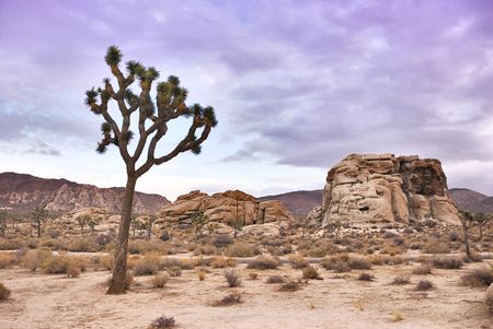 joshua tree national park: Twilight in Joshua Tree national park in California