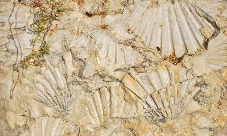 Fossilized sea shell imprints in the rock. Stock Photo