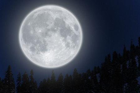 Volle maan stijgt boven naald bomen tegen heldere hemel.