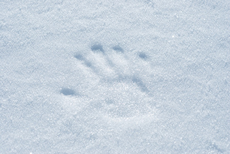 snowscene: Handprint made with light pressure on the snow surface.
