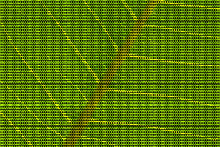 Vector Illustration of a backlit leaf made of dots showing nerves