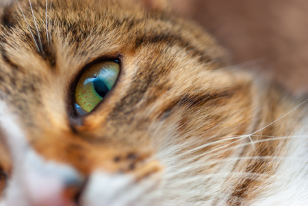 Close up of a cat with green eyes staring at the camera. Stock Photo