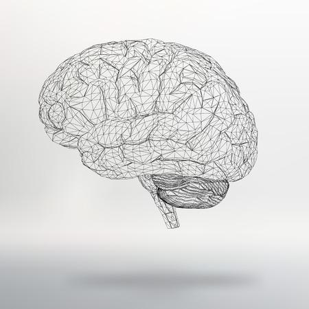 brain illustration: Vector illustration human brain.