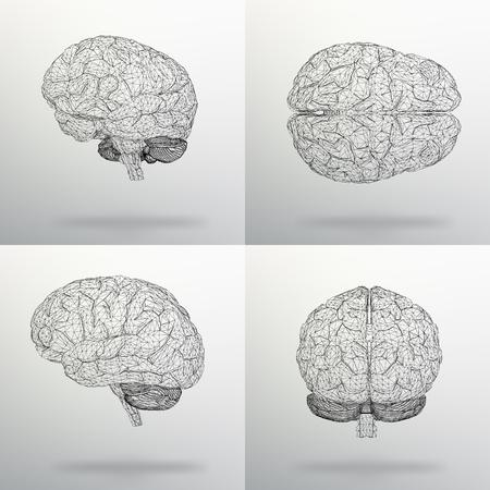 ベクトル図は、人間の脳を設定します。