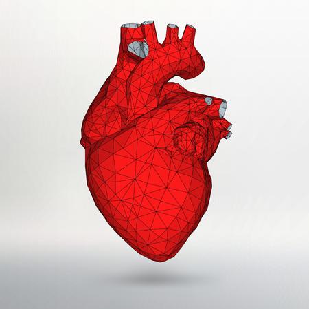 Menschenherz. Inneres Organ. Anatomie-Konzept Lokalisiert Auf Einem ...