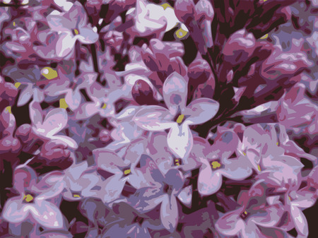 Lilac flowers combined in inflorescence