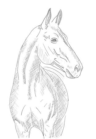 A sketch of a horse on a white background. Vector electronic drawing stylized as a pencil or pen Illustration