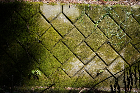 checkered concrete wall with lichen in the forest