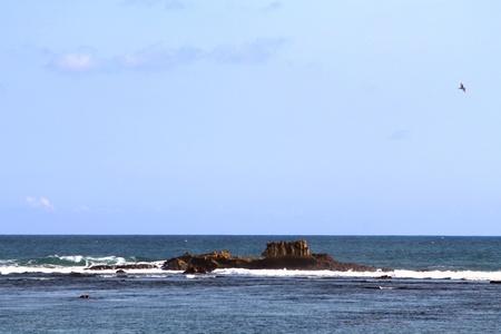 Coral shaped like a submarine Stock Photo - 13439087