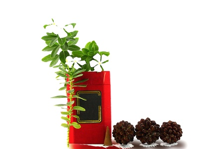 Tea box, with a design in the middle, decorated flowers, incense and pine seeds Stock Photo - 14386731