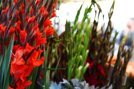 Columbia Road Flower Market in London, United Kingdom 38